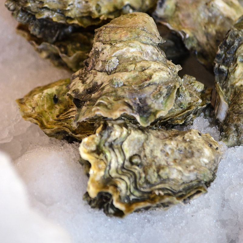 Oysters-Quilcene-Live!...